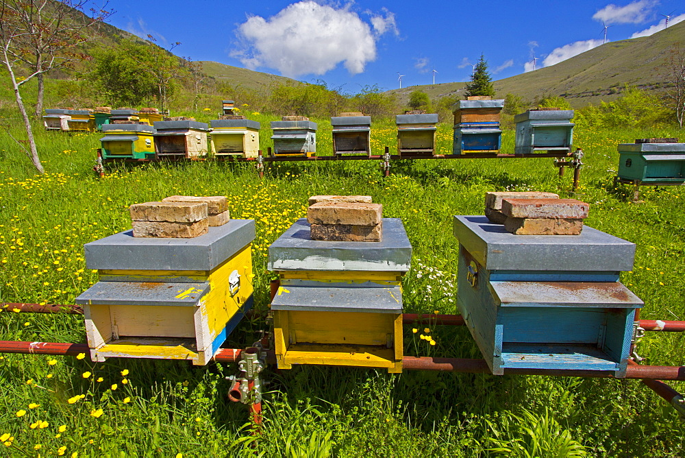 Hives in a meadow, Abruzzo Italy