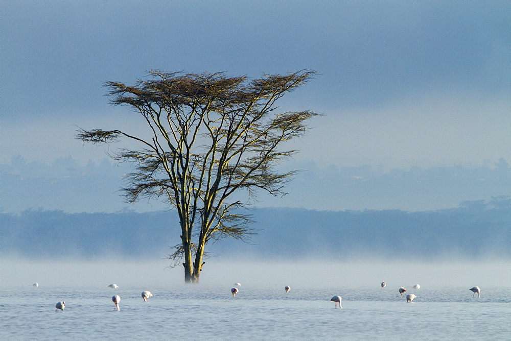 Kenya, lake Nakuru, flooded in 2014