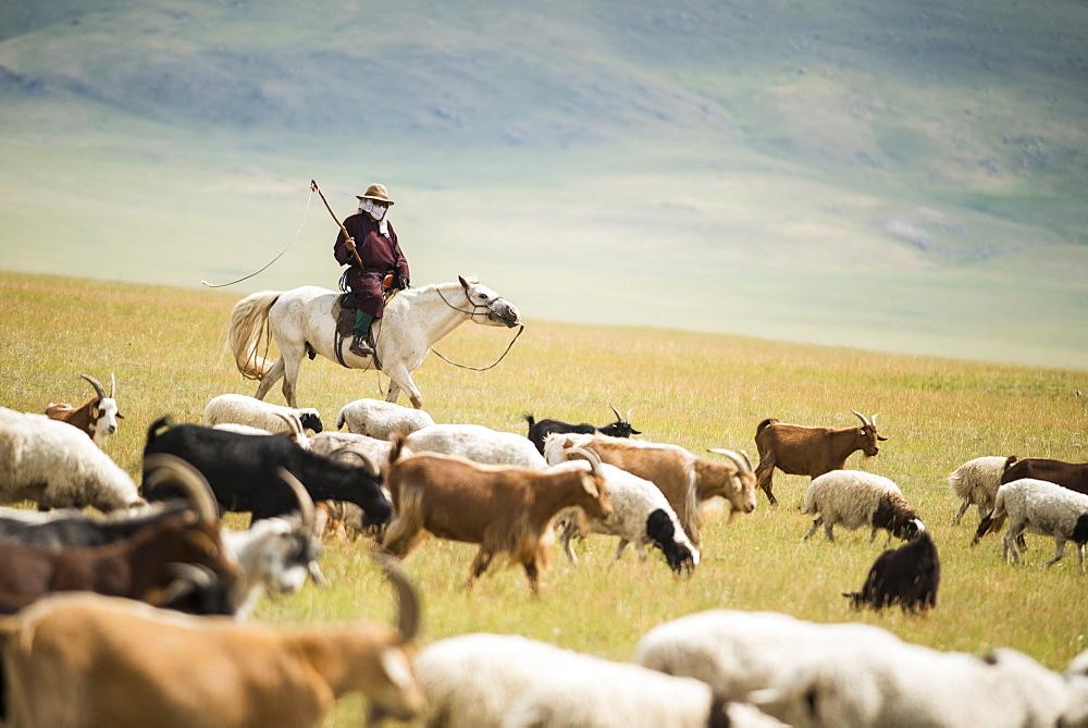 Herdsman goats riding, Province Khövsgöl - Mongolia