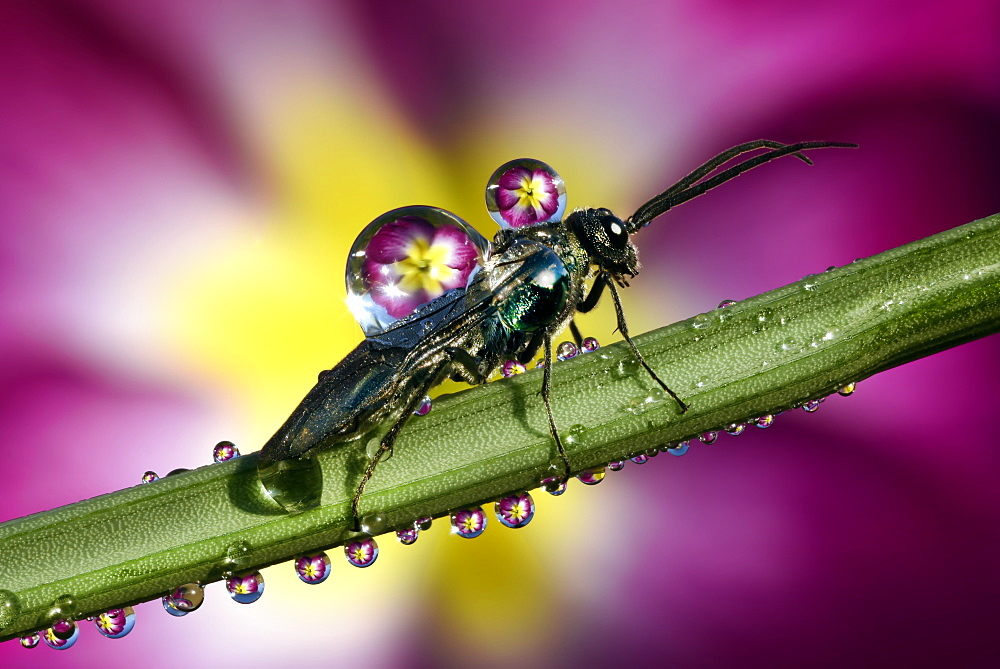 Insect covered by dew drops on a stem - 860-286732