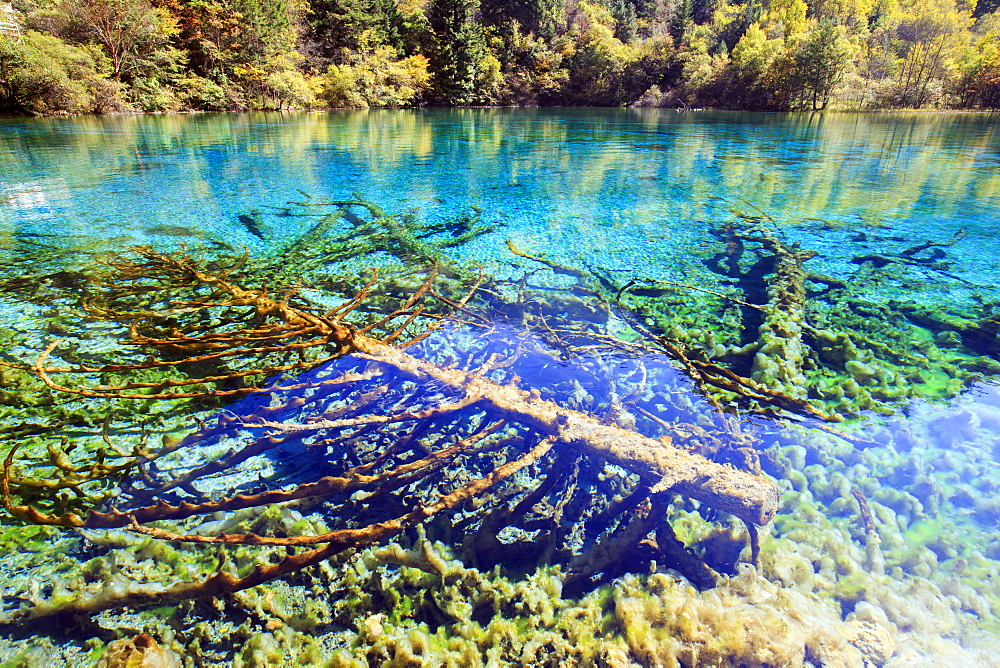 Colorful lake, Jiuzhaigou valley, Sichuan, China