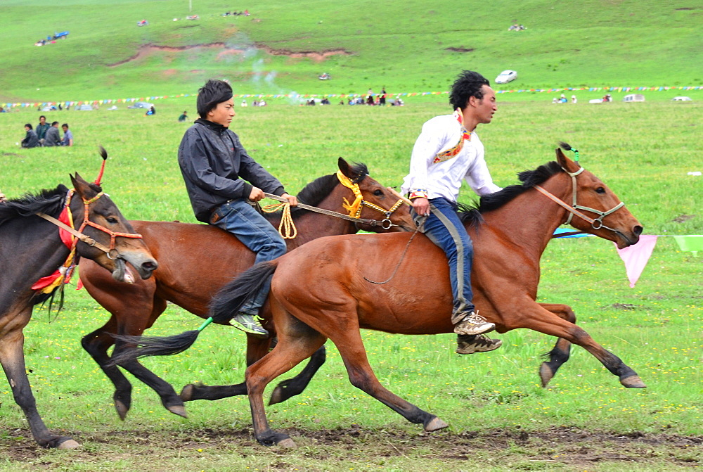 Horse Racing at the Lapste - Tibet China