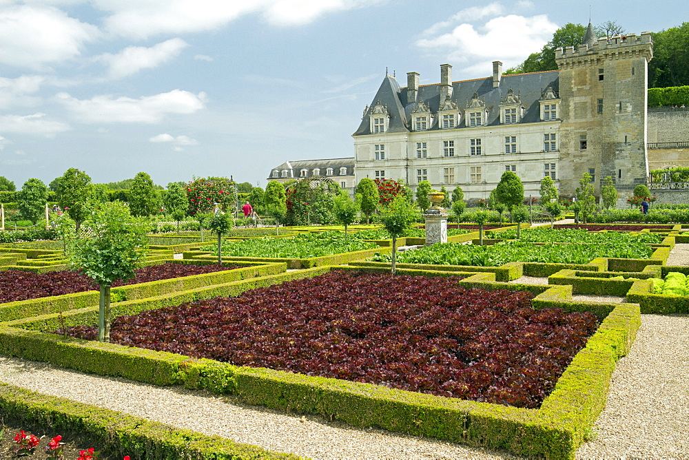 The vegetable garden. Chateau de Villandry, France