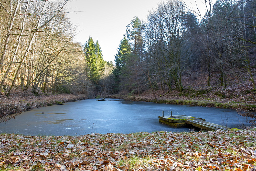 Frozen pond in a forest, winter, Moselle, France