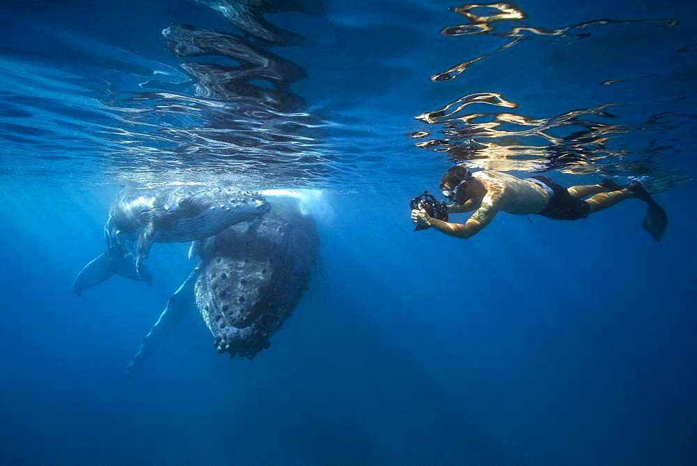 Photographer and humpback whale (Megaptera novaeangliae) with his young in the waters of the Mayotte lagoon.