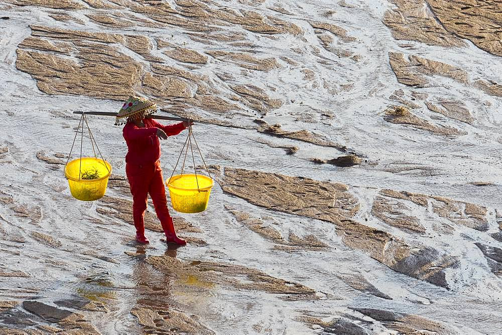 Fisherman on foot, harvesting shells, wearing a yoke with two buckets, Woman, Xiapu County, Fujiang Province, China