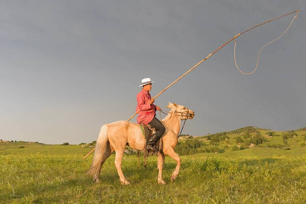 Mongol on a horse, with a catch lasso, Bashang Grassland, Zhangjiakou, Hebei Province, Inner Mongolia, China