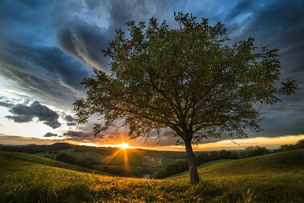 Sunset over the hills and walnut tree, Langhirano, Parma, Italy