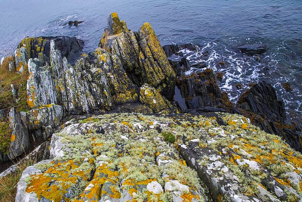 Lichens on rocks, Bay of Morlaix, Brittany, France