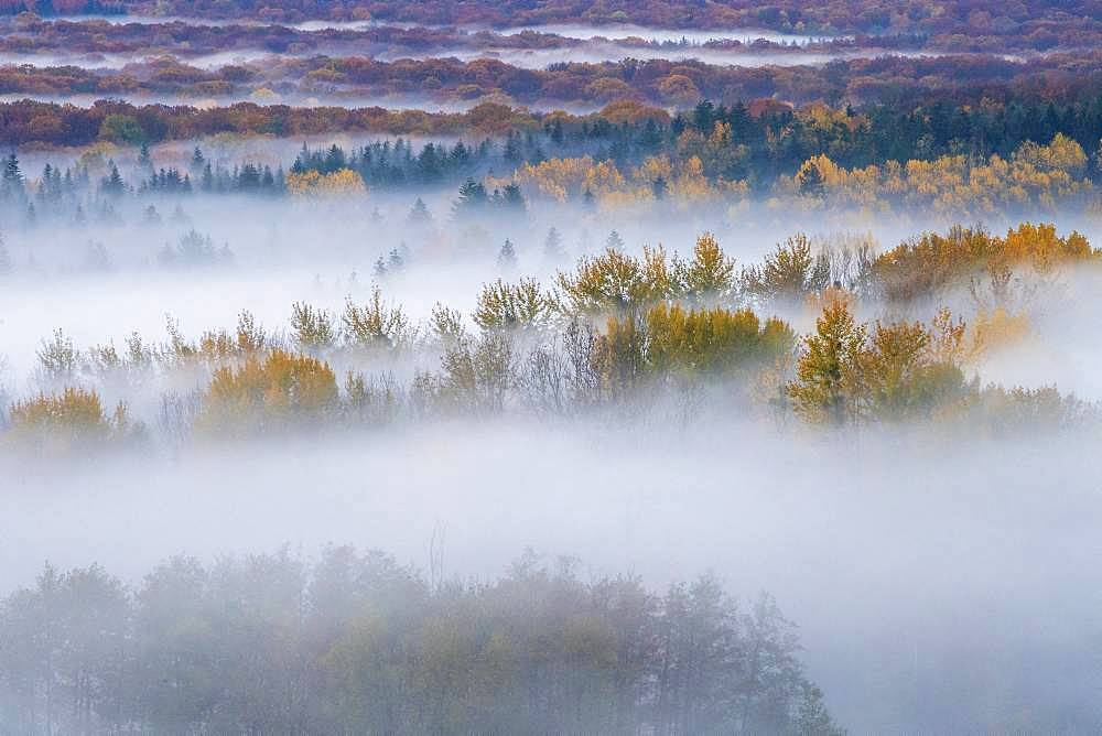 Morning mists in autumn, on Darney Forest, Vosges, France