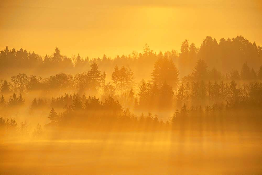 Morning mists in autumn, on Vôge and Darney Forest, Vosges, France