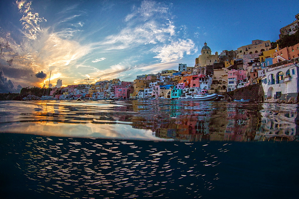 School of fish under the surface at dusk, island Procida, La Corricella, Tyrrhenian Sea, Campania Italy