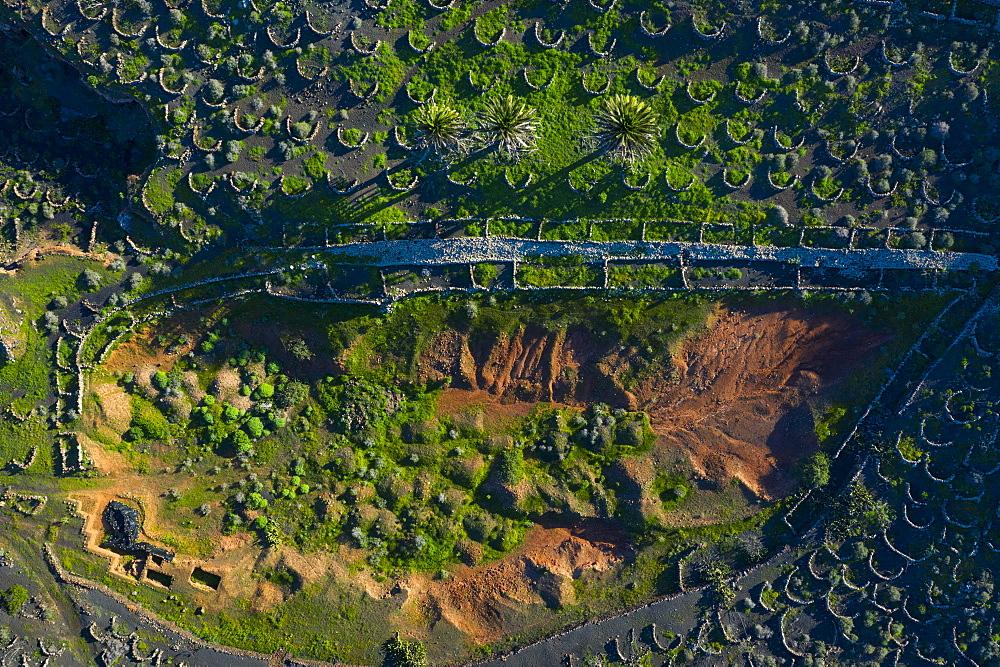 Vineyard, Rural landscape, Tiagua, Lanzarote Island, Unesco Biosphere Reserve, Canary Islands, Spain, Europe - 860-288319