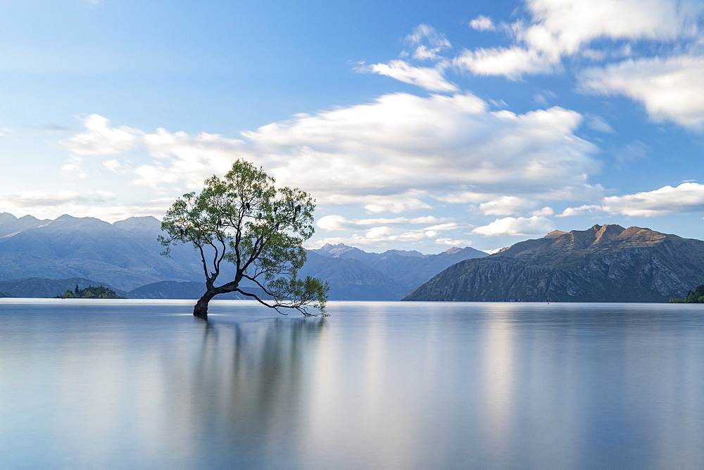 Wanaka Ttree, lonely tree in water, Lake Wanaka, South Island, New Zealand