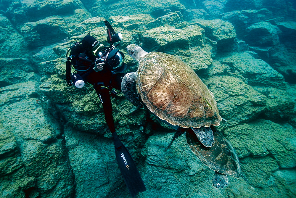 Green Turtle (Chelonia mydas) and diver, Tenerife, Canary Islands, Spain, Atlantic Ocean