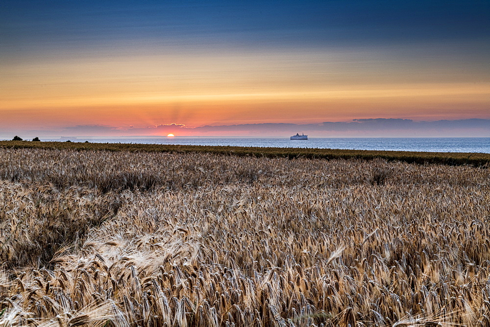 Barley field at sunset, Sangatte, Hauts de France, France