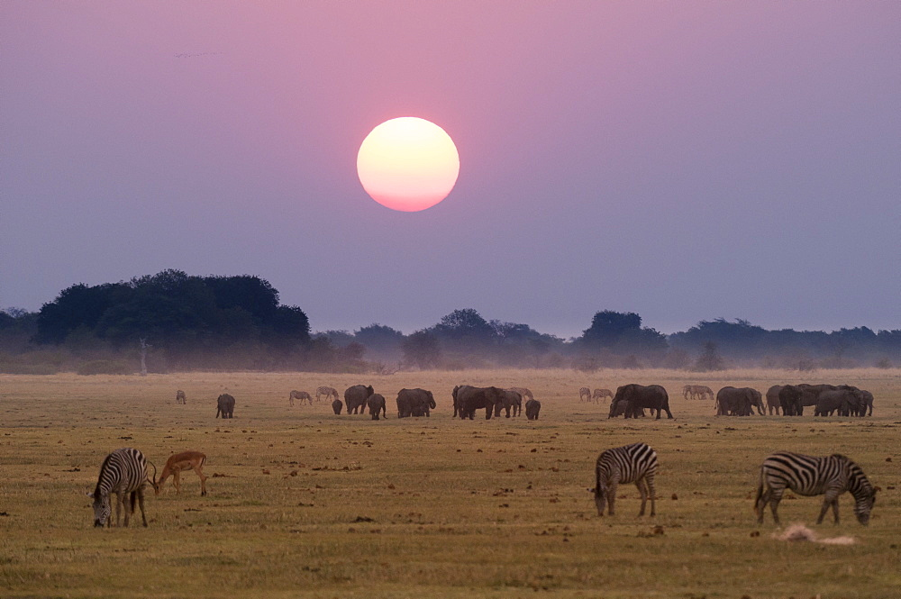 Elephants and zebras at sunset. Chobe National Park, Botswana.