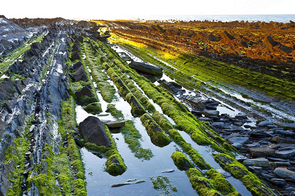 parallel rock formations on sea shore in tidal zone of sea outdoors La Rasa Mareal flysch cliffs algae alga algal growth Basque Country Spain Europe