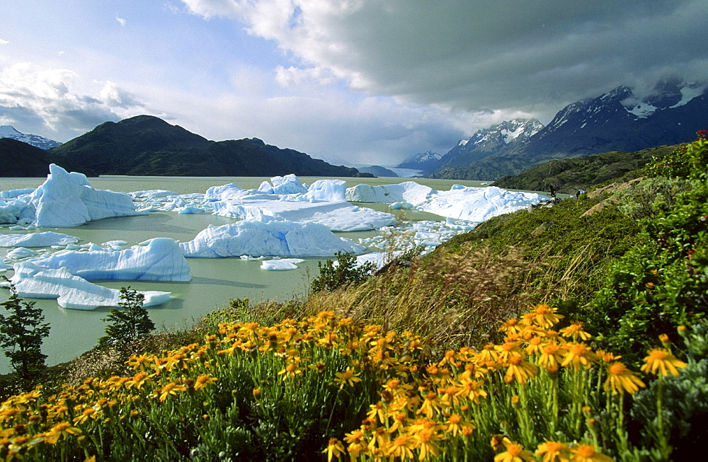 ice floes Lago Grey Torres del Paine National Park Patagonia Chile