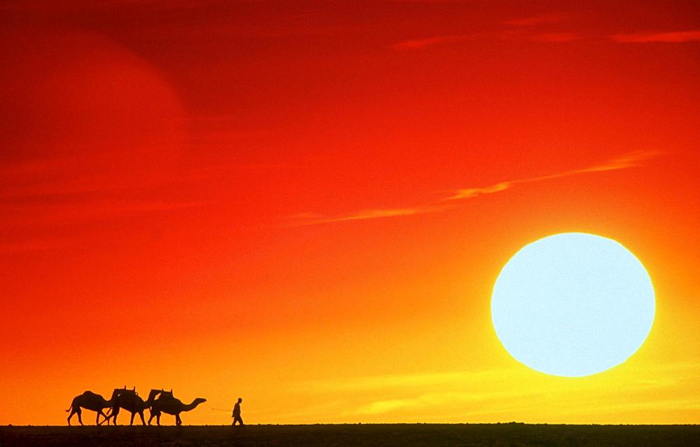 camel caravan at sunset Nature Scenery Spain Canary Islands Fuerteventura Spain Canary Islands