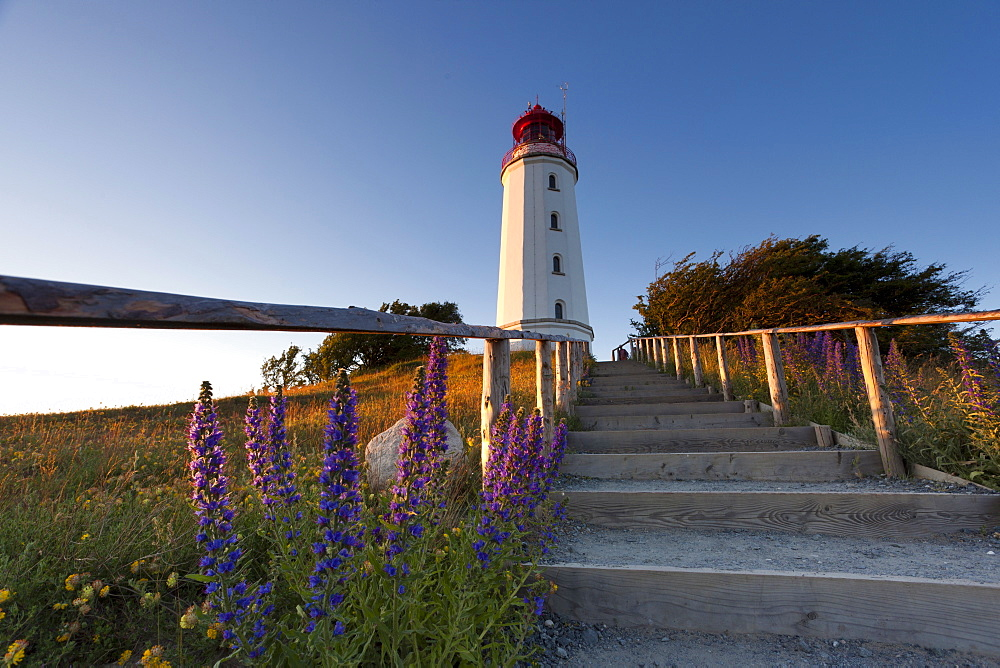 landscape coast steps leading to lighthouse Hiddensee Mecklenburg-Western Pomerania - 869-5664