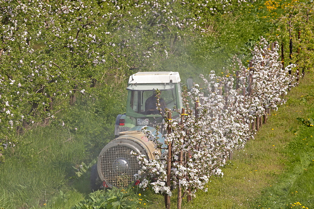 apple tree fruit trees apple trees with blossoms on field agriculture tractor spraying insecticide Lower Saxony Germany (Malus) - 869-5753