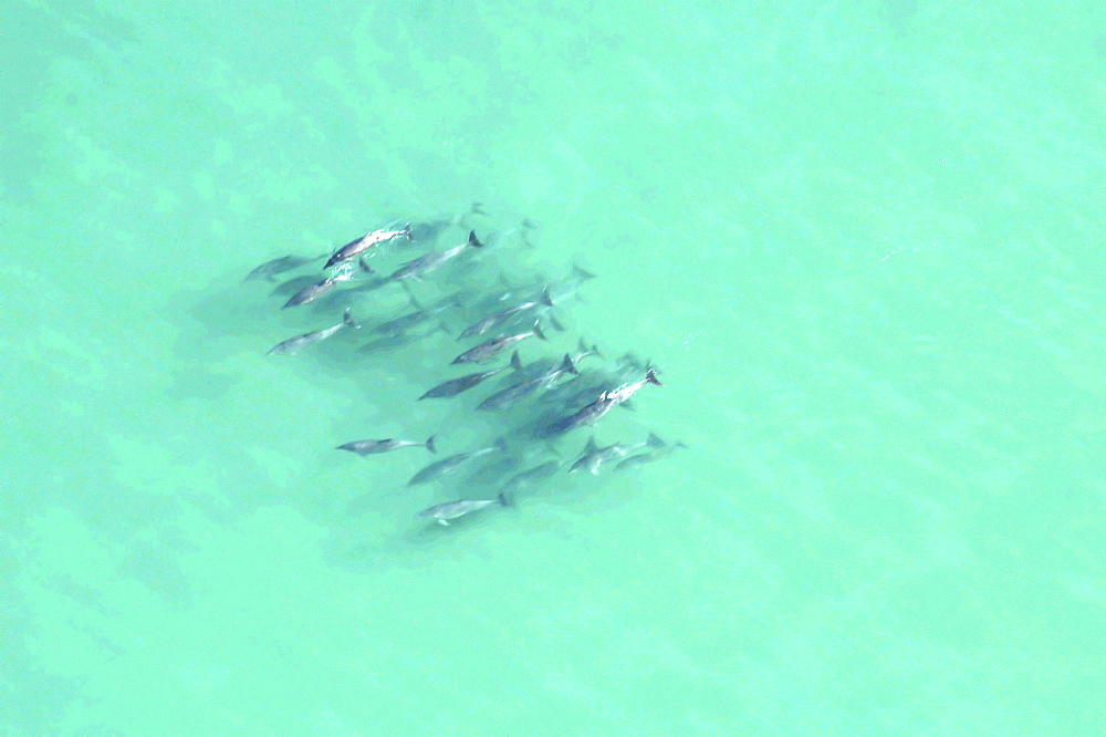 Dolphins. The Cape, South Africa - 907-3