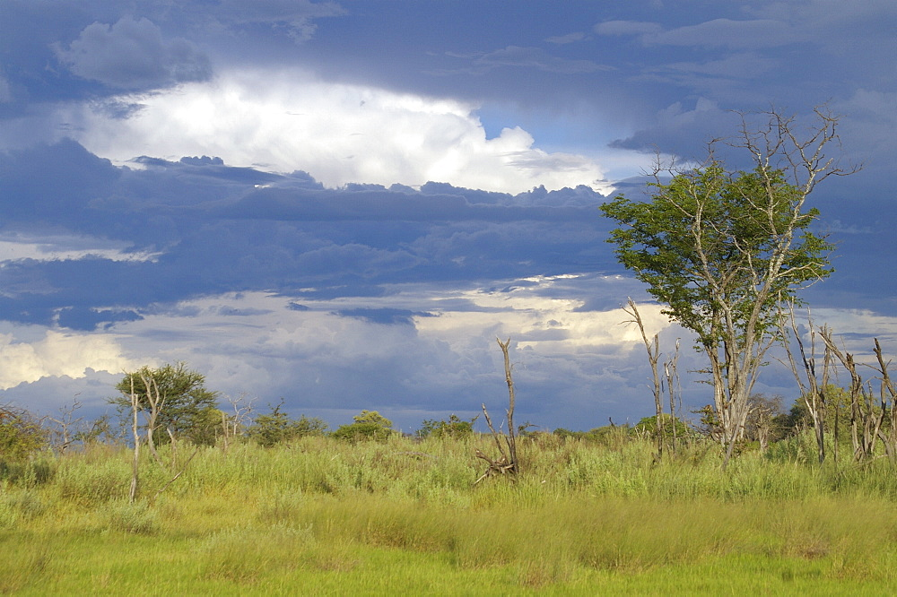 Thunderstorm. Okavango Delta, Botswana - 907-43