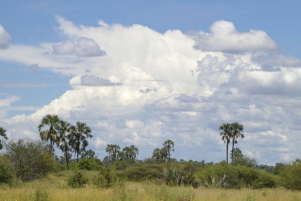 Thunderstorms building. Okavango Delta, Botswana - 907-46