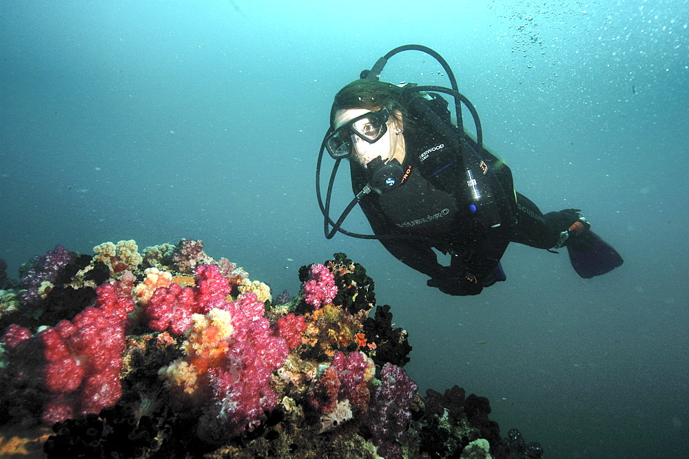 soft coral diver.