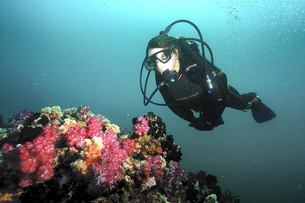 soft coral diver.Seychelles, Indian Ocean                       (RR)