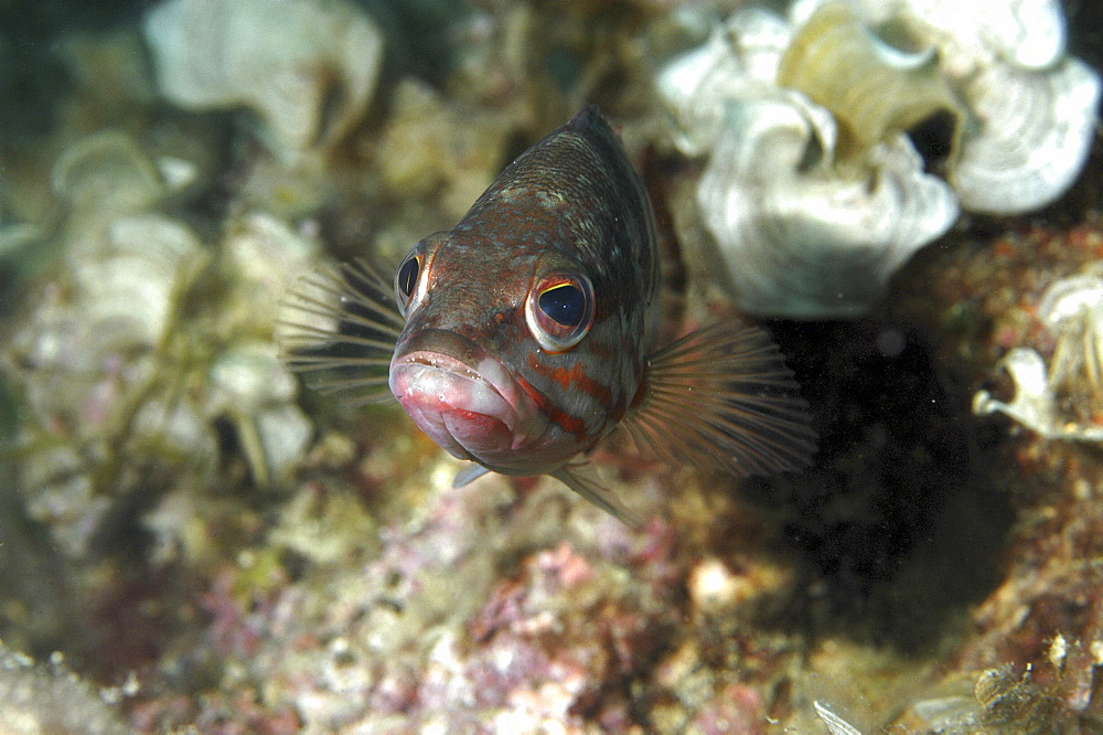 Fish (Species unknown)