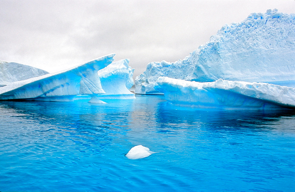 Blue ice and icebergs while traveling in Antarctica. Pléneau Island, Antarctica - 909-206