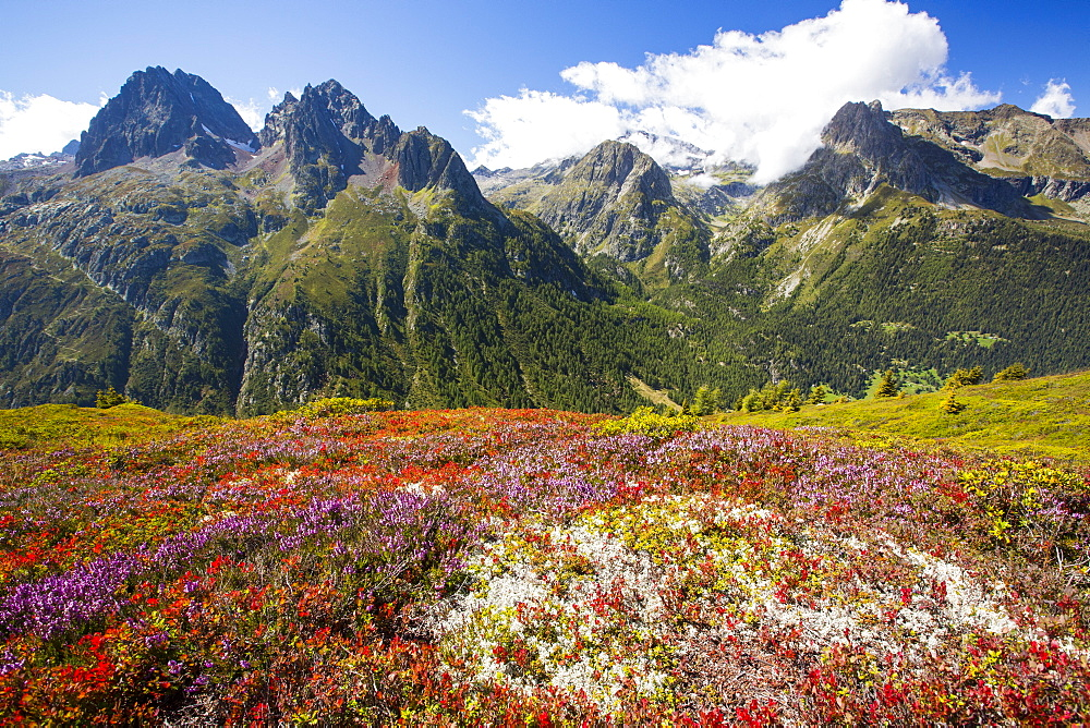 The Aiguille Rouge range from the Aiguillette des Posettes with Bilberry plants colouring up in late summer.