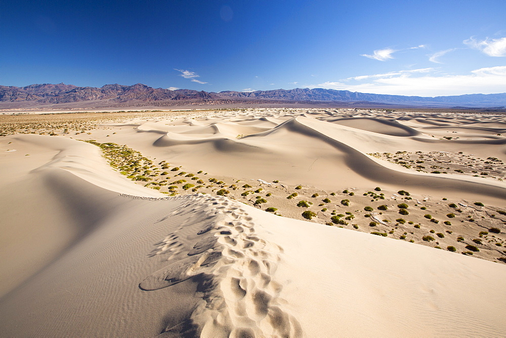 The Mesquite flat sand dunes in Death Valley which is the lowest, hottest, driest place in the USA, with an average annual rainfall of around 2 inches, some years it does not receive any rain at all.