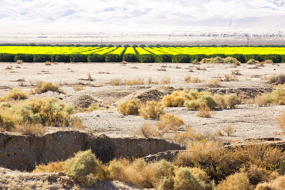 The contrast between agricultural land being irrigated, and the parched dessicated land not irrigated, after four years of California's catastrophic drought. $2 billion has been wiped off California's agricultural sector.