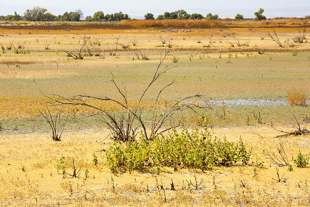 The Kern Valley Wildlife Refuge in California's Central Valley was created as important resting and feeding grounds for wildfowl migrating along the pacific flyway. After four years of unprecedented drought, the water shortages in California are critical. The reserve has received only 40% of its usual warer, with the result that most of the lake beds are dried up and dessicated, leaving the birds nowhere to go.
