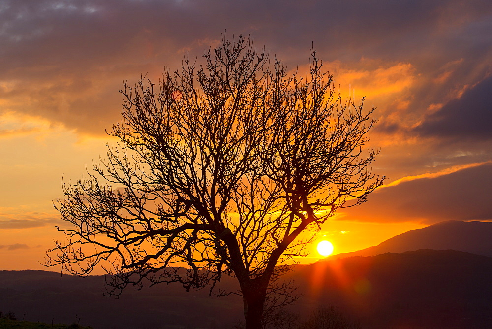 The setting sun over the Coniston hills in the Lake district, Uk, with a tree in the foreground.