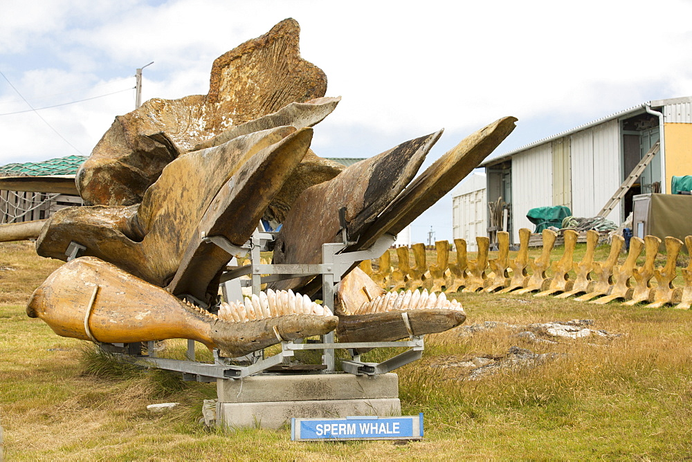 A householder in Port Stanley in the Falkland Islands who has created a whale museum, with an anti whaling slant.