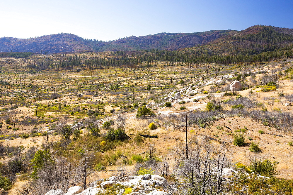 Wildfire damage in Yosemite National Park, California, USA. Most of California is in exceptional drought, the highest classification of drought, which has lead to an increasing number of wild fires. - 911-10816
