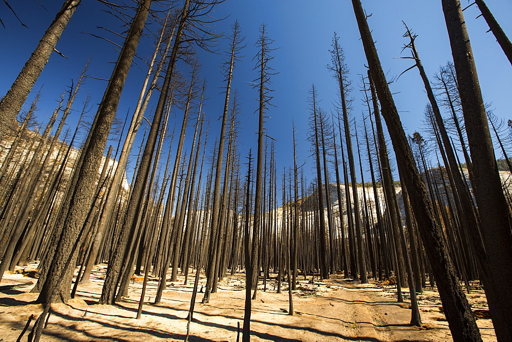 A forest fire destroys an area of forest in the Little Yosemite Valley in the Yosemite National Park, California, USA. Following four years of unprecedented drought, wildfires are becoming increasingly common. This fire was started by a lightening strike.