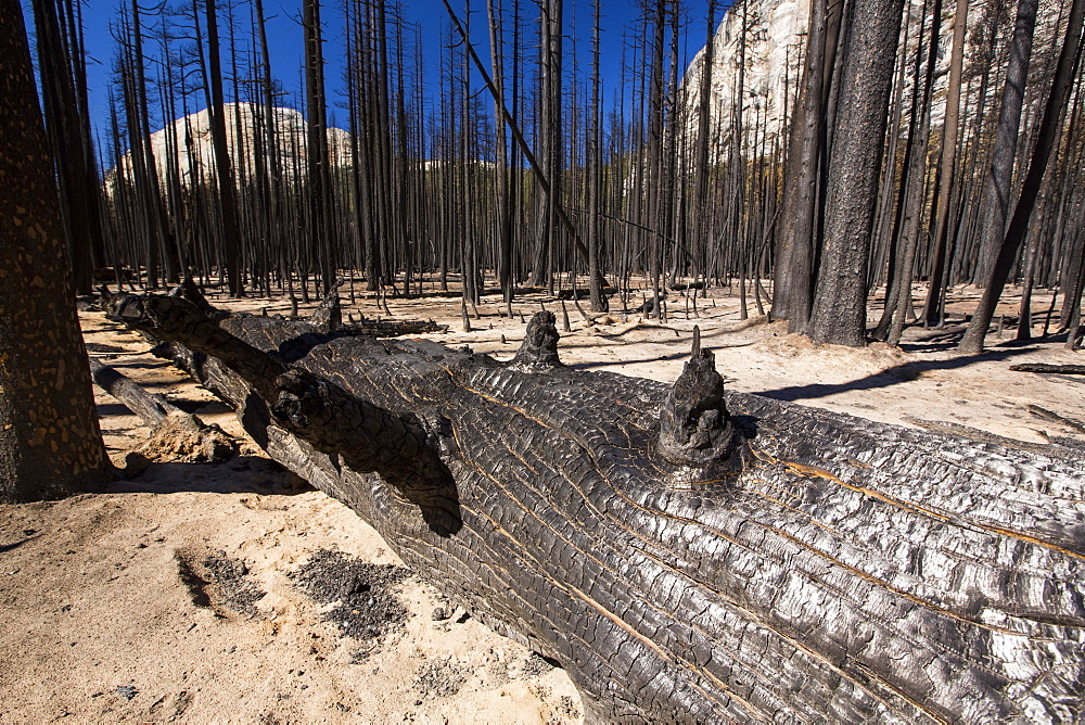 A forest fire destroys an area of forest in the Little Yosemite Valley in the Yosemite National Park, California, USA. Following four years of unprecedented drought, wildfires are becoming increasingly common. This fire was started by a lightening strike. - 911-10820