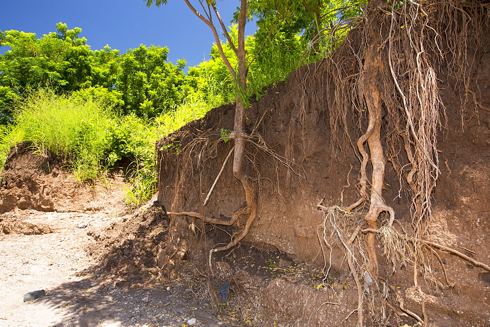 In mid January 2015, a three day period of excessive rain brought unprecedented floods to the small poor African country of Malawi. It displaced nearly quarter of a million people, devastated 64,000 hectares of land, and killed several hundred people. This shot shows tree roots exposed as the river bank was washed away near Chikwawa.