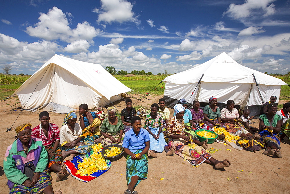 In mid January 2015, a three day period of excessive rain brought unprecedented floods to the small poor African country of Malawi. It displaced nearly quarter of a million people, devastated 64,000 hectares of land, and killed several hundred people. This shot shows displaced people in Baani refugee camp near Phalombe, preparing pumpkin flowers to eat.