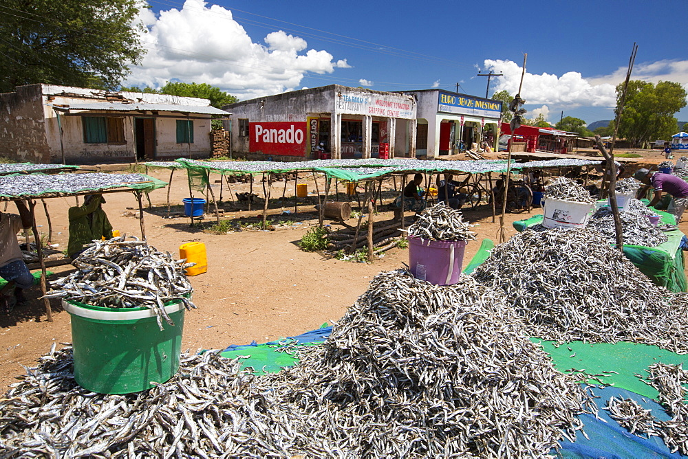 Fish caught in Lake Malawi, on drying racks at Cape Maclear, Malawi, Africa. - 911-10912