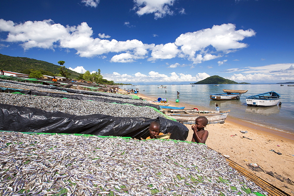 Fish drying racks drying a catch of small fish at Cape Maclear on the shores of Lake Malawi, Malawi, Africa. - 911-10915