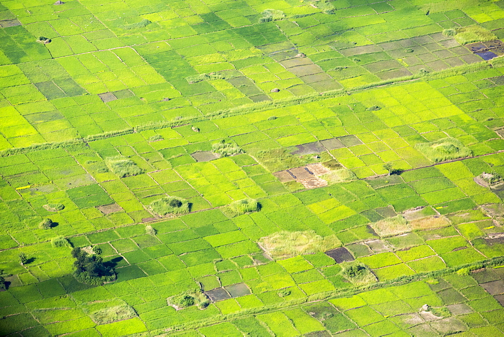 Looking down on rice crops in the lower Shire Valley, Malawi, Africa. - 911-10918