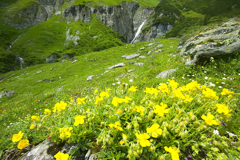 A high Alpine valley with wild flowers at Bargis, Switzerland, Europe