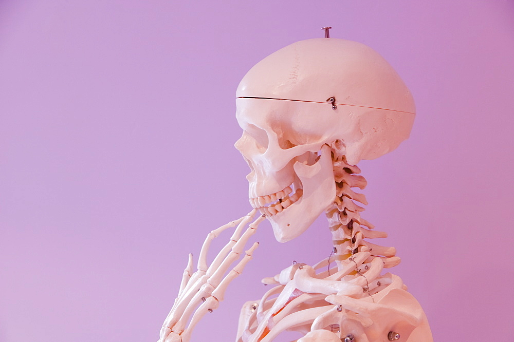 A human skeleton in a thoughtful pose