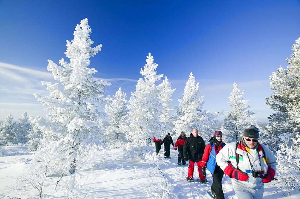 People snow shoeing in the Urho Kehkkosen National Park near Saariselka, Northern Finland, Finland, Scandinavia, Europe